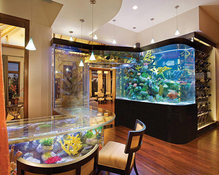 Aquarium Maintenance Service Palm Beach