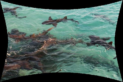Custom Aquarium Fort Lauderdale