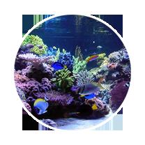 Living Reef Tank