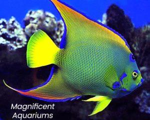 Luxury Aquariums