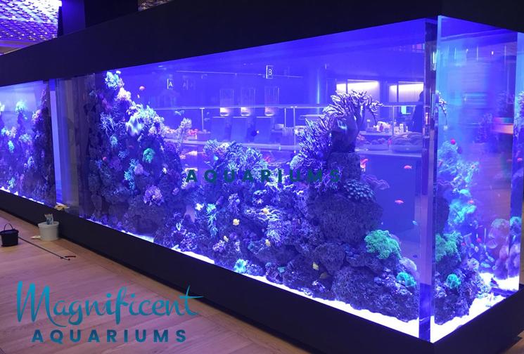 Fish Tank Store Fort Lauderdale