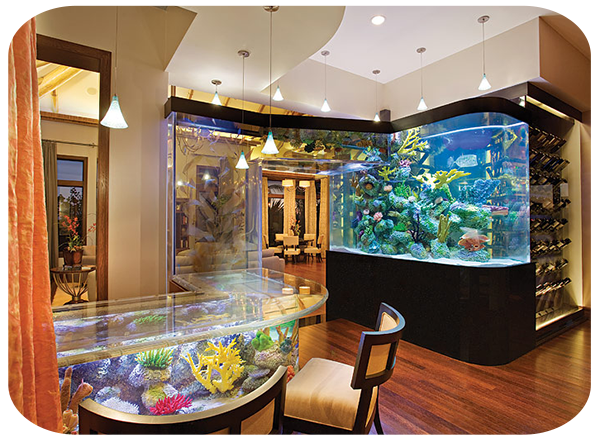 bedroom fish tank custom aquariums magnificent aquariumsmagnificent aquariums 10433